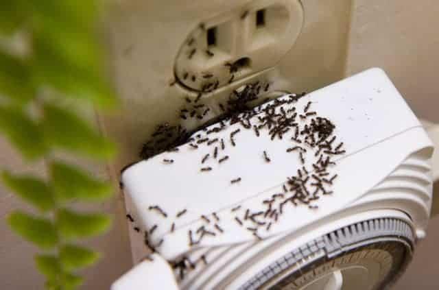Evde karınca nasıl gider? İşte en etkili doğal karınca ilacı