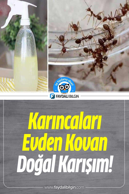 Evde karınca nasıl gider? İşte en etkili doğal karınca ilaçları