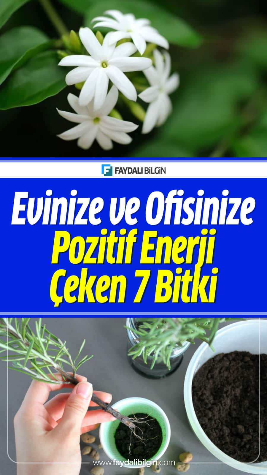 Evinize ve Ofisinize Pozitif Enerji Çeken 7 Bitki