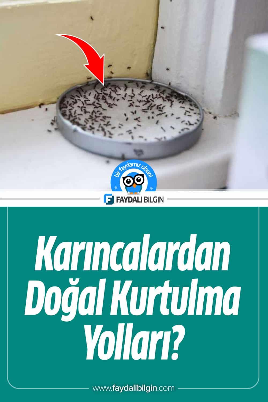 Karıncalardan Doğal Kurtulma Yolları?
