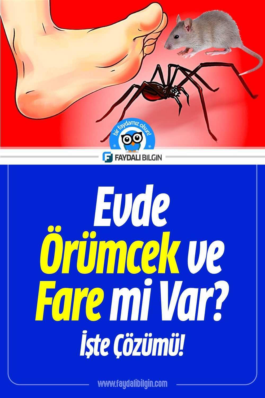 Evde Örümcek ve Fare mi Var? İşte Çözümü