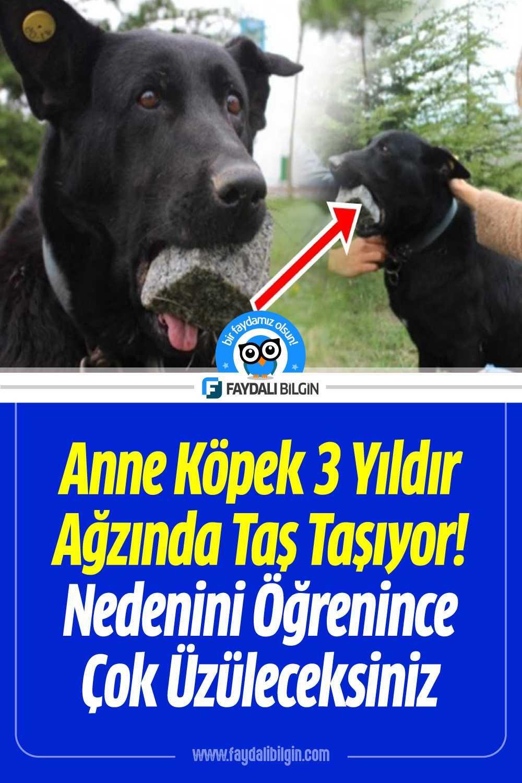 Anne Köpek 3 Yıldır Ağzında Taş Taşıyor Nedenini Öğrenince Çok Üzüleceksiniz!
